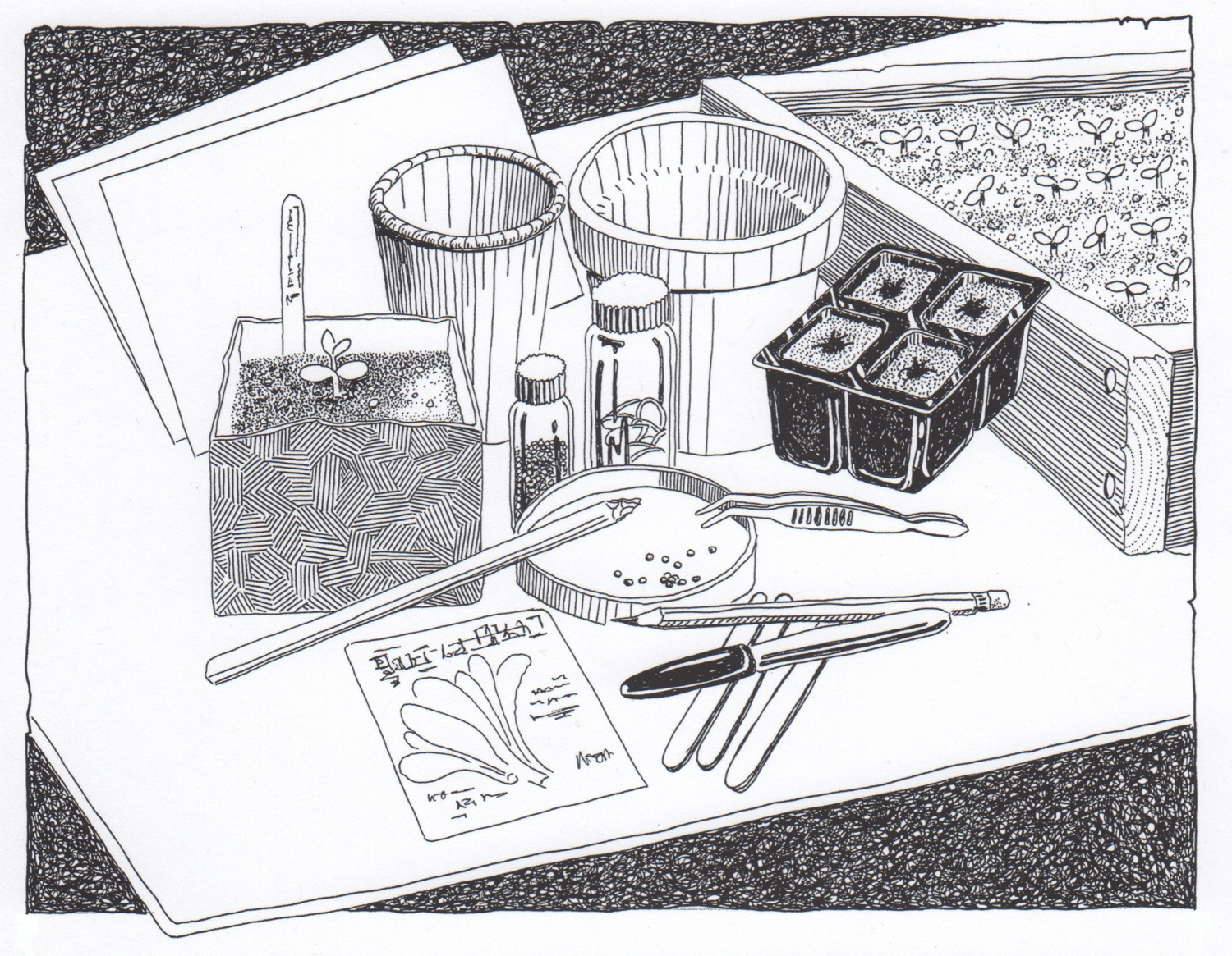 """""""Starting seeds"""", an illustration from the hand-lettered and hand-illustrated book  Gardening: an Ecological Approach  .© Fred Montague"""