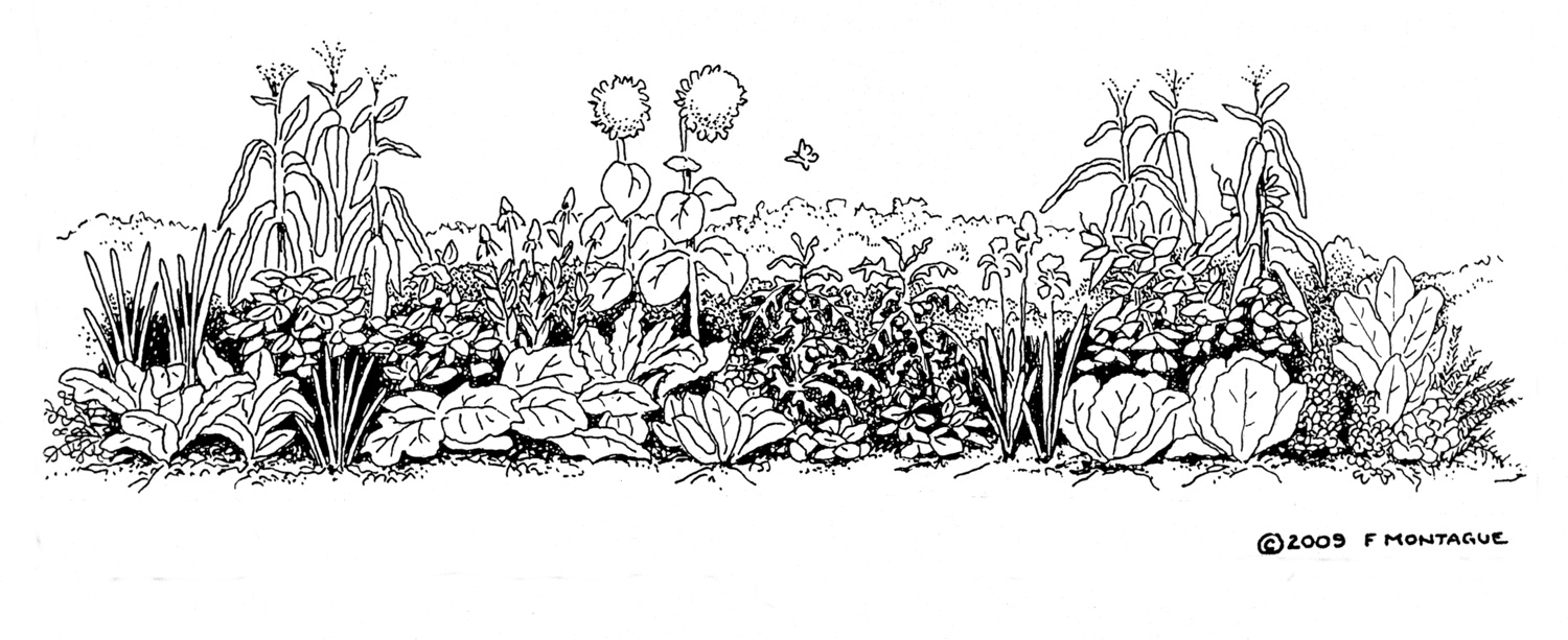 Illustration from   Gardening: An Ecological Approach  . © Fred Montague
