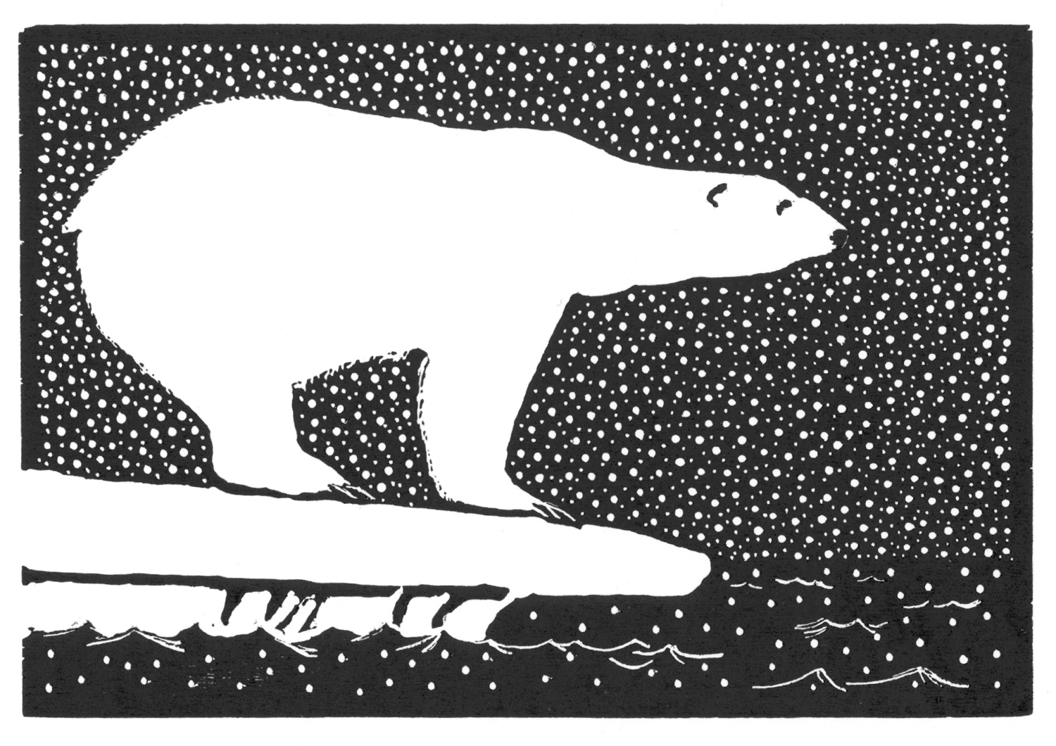 Polar Bear • © Fred Montague  $48 • image 8 x 5.5 • mat 14 x 11  Edition size: 88 • status: available