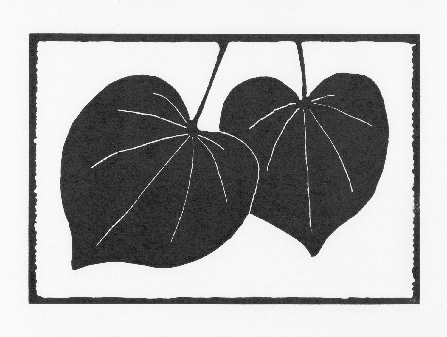 Redbud Leaves • © Fred Montague  $48 • image 8 x 5.5 • mat 14 x 11  Edition size: 88 • status: available