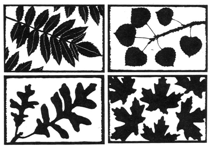 notecards2_leaves
