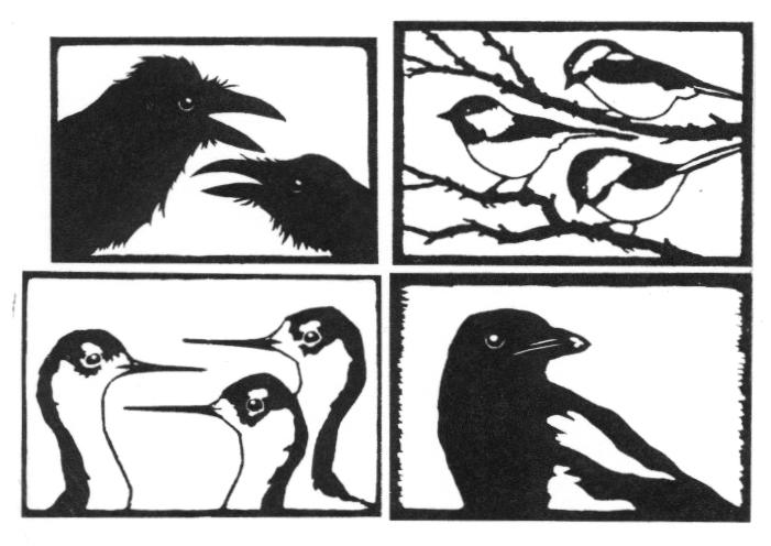 notecards3_birds