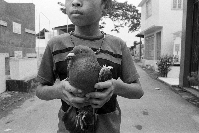 dove bird boy pet philippines manila north cemetery