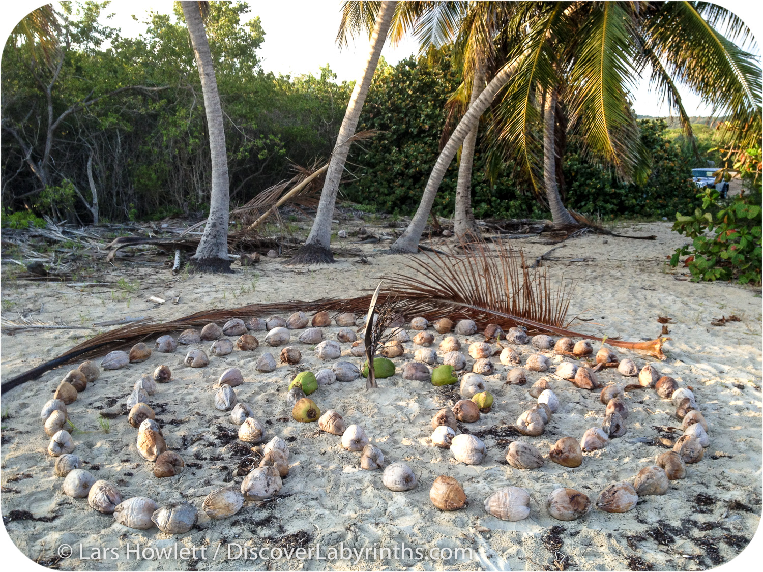 Coconut Labyrinth