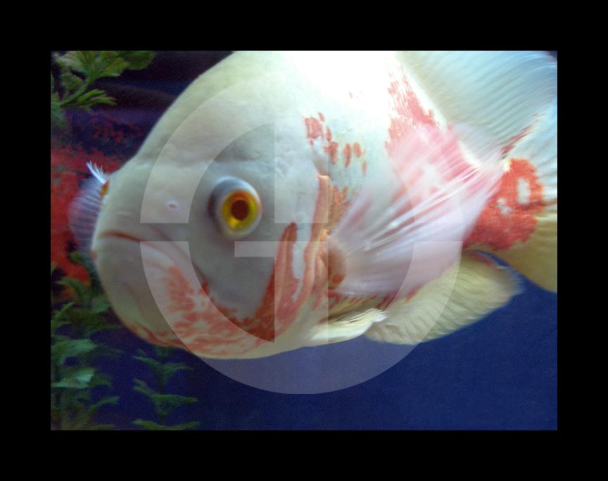 MGDfish1.jpg