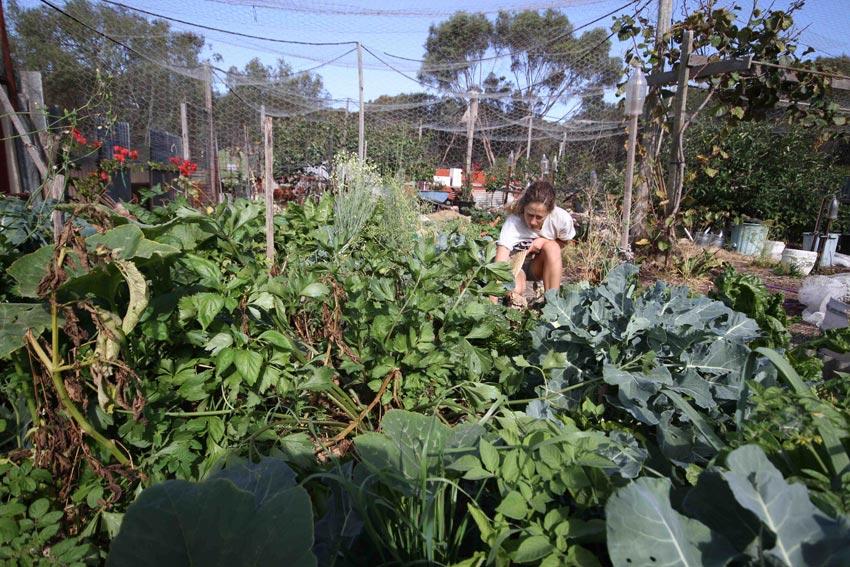 Getting amongst the impressive vegetable patch on Kangaroo Island, SA