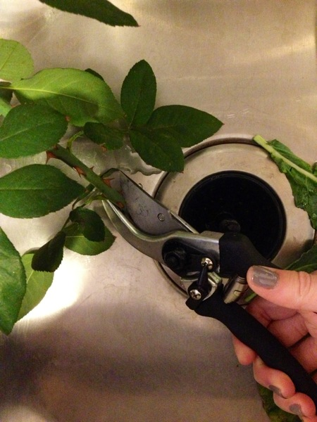 It may look a bit intimidating to someone without a green thumb, but, I assure you, using pruning shears is easier than it looks.