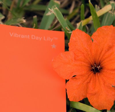 Glidden's  Vibrant Day Lily . One of my all time favorites.