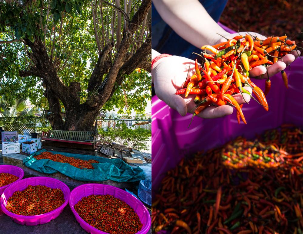 Thai Chiles