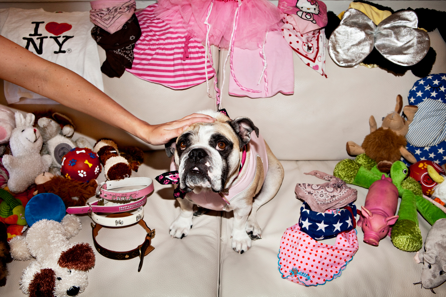 Love for an animal. Ditte Marie had to wait for a long time to  get the English bulldog that she named Carla Marie. 'If I had to choose  between a boyfriend who wouldn't want to live with a dog and Carla, I  would always choose Carla.'