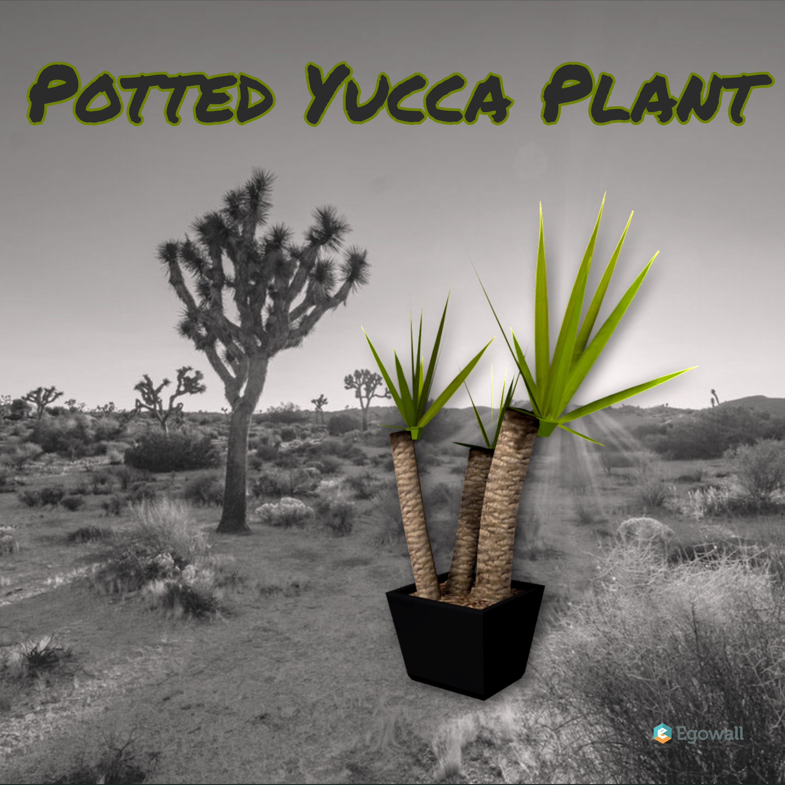 Potted Yucca Plant.Instagram.jpg