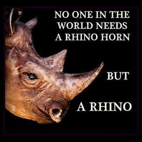 Rhinosorus Horn Poaching.png