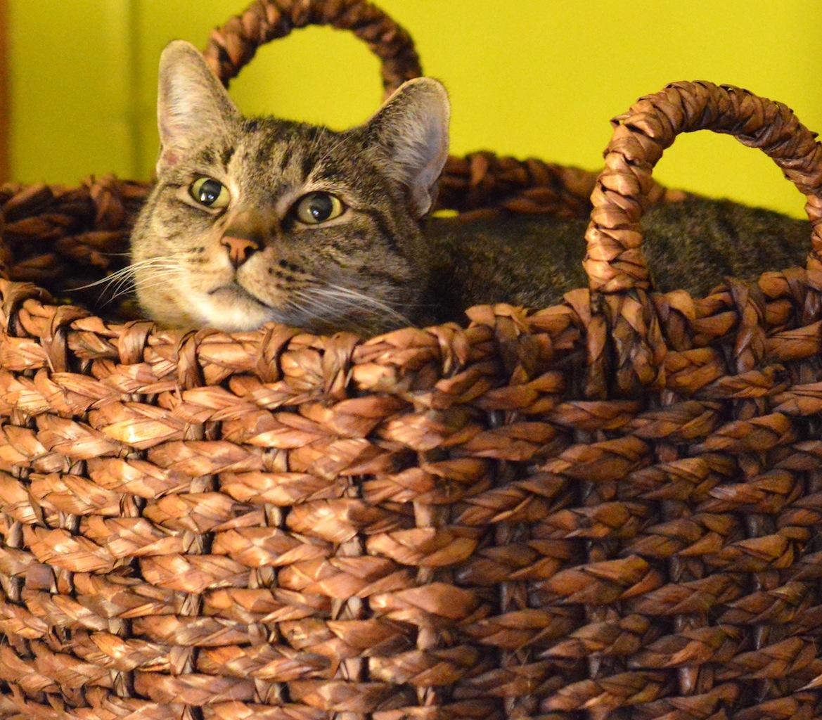 Dinah, beloved letterpress cat. 2006 | 2016