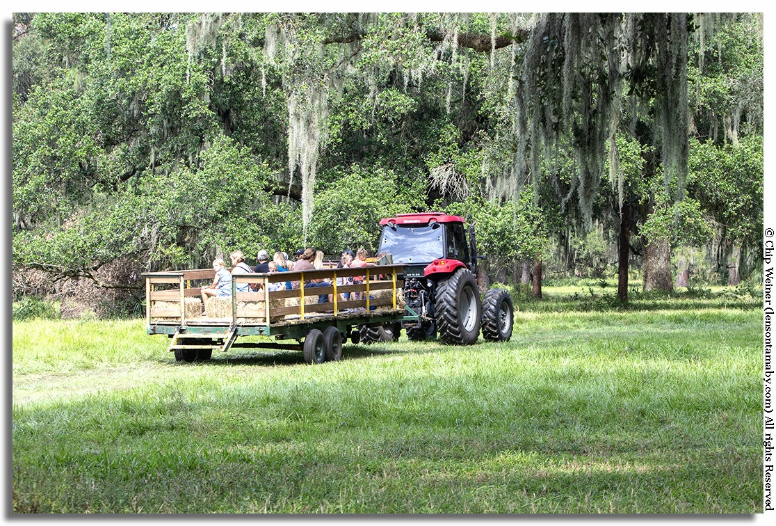 What's more country than a hayride into the pasture and scrub? Hayrides, horseback riding, and other activities are available for an additional nominal fee.