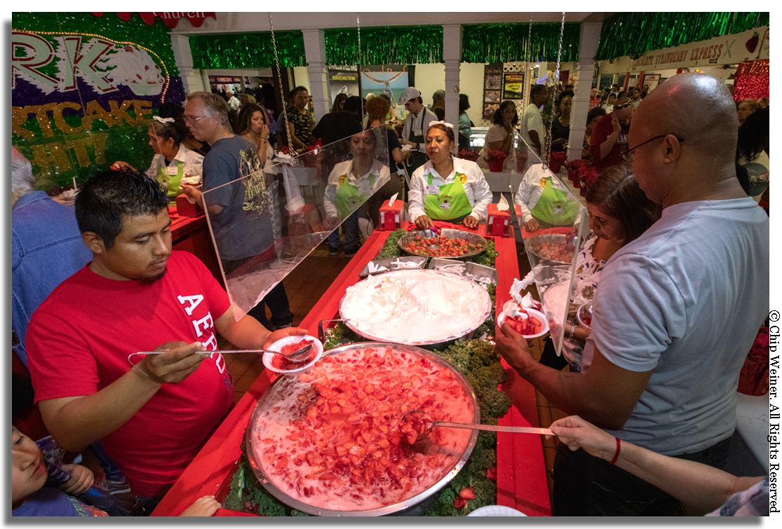 "In the strawberry shortcake construction line at the St Clement Catholic Church booth, hungry eaters select the base of shortcake or biscuit and then proceed to build their own. Attendants at the end of the line (in green) place a final ""capper"" berry on the top and it's time to eat!"