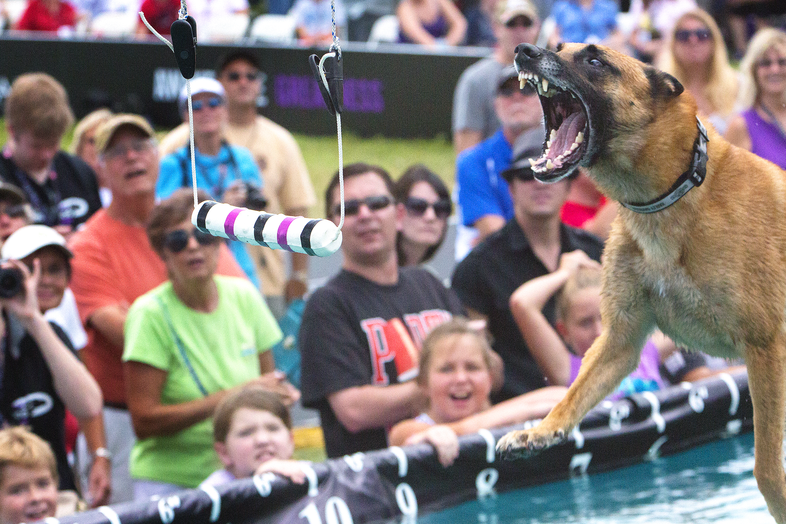 Baxter, trained by Tony Lambert, competes in the distance challenge..jpg