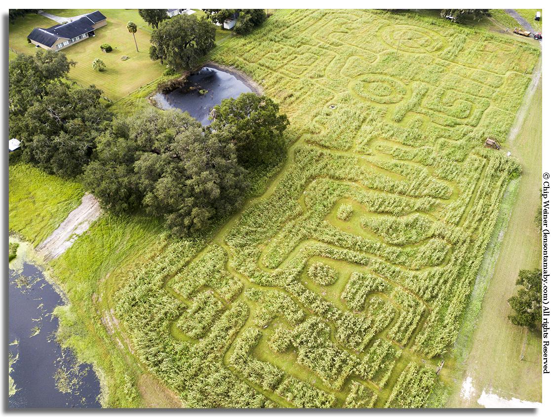 Aerial view of the Fox squirrel corn maze