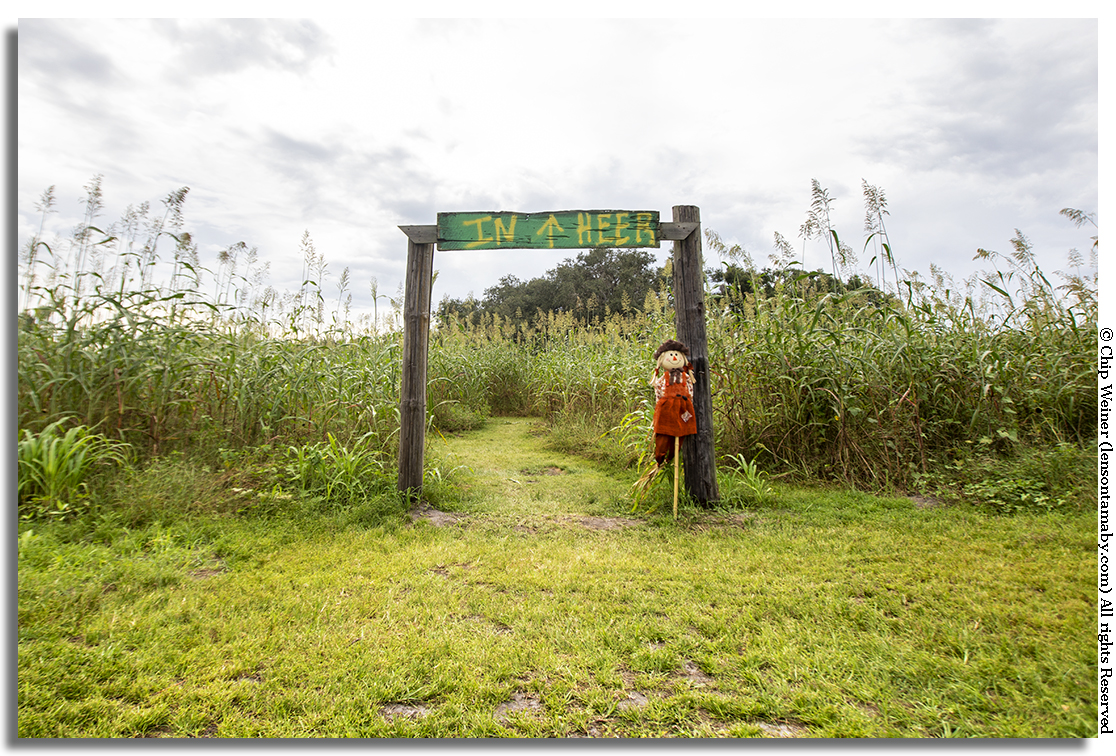 Here's where the Fox Squirrel Corn Maze at the Single R ranch starts. It's waiting for you. Put down the phone, pack your camera and the kids, and take a break in the country. Eat some food, play some games, and relax! Set a spell. You need it! You deserve it! Celebrate the fall season….