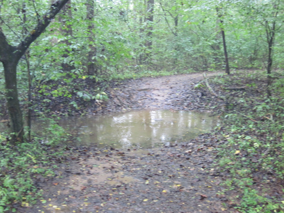 More trail flooding on Mos Flats - Creekside