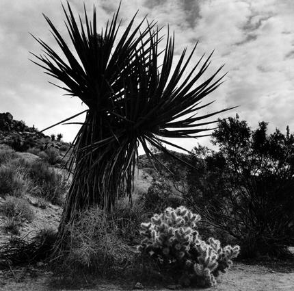 Cactus JT.jpg