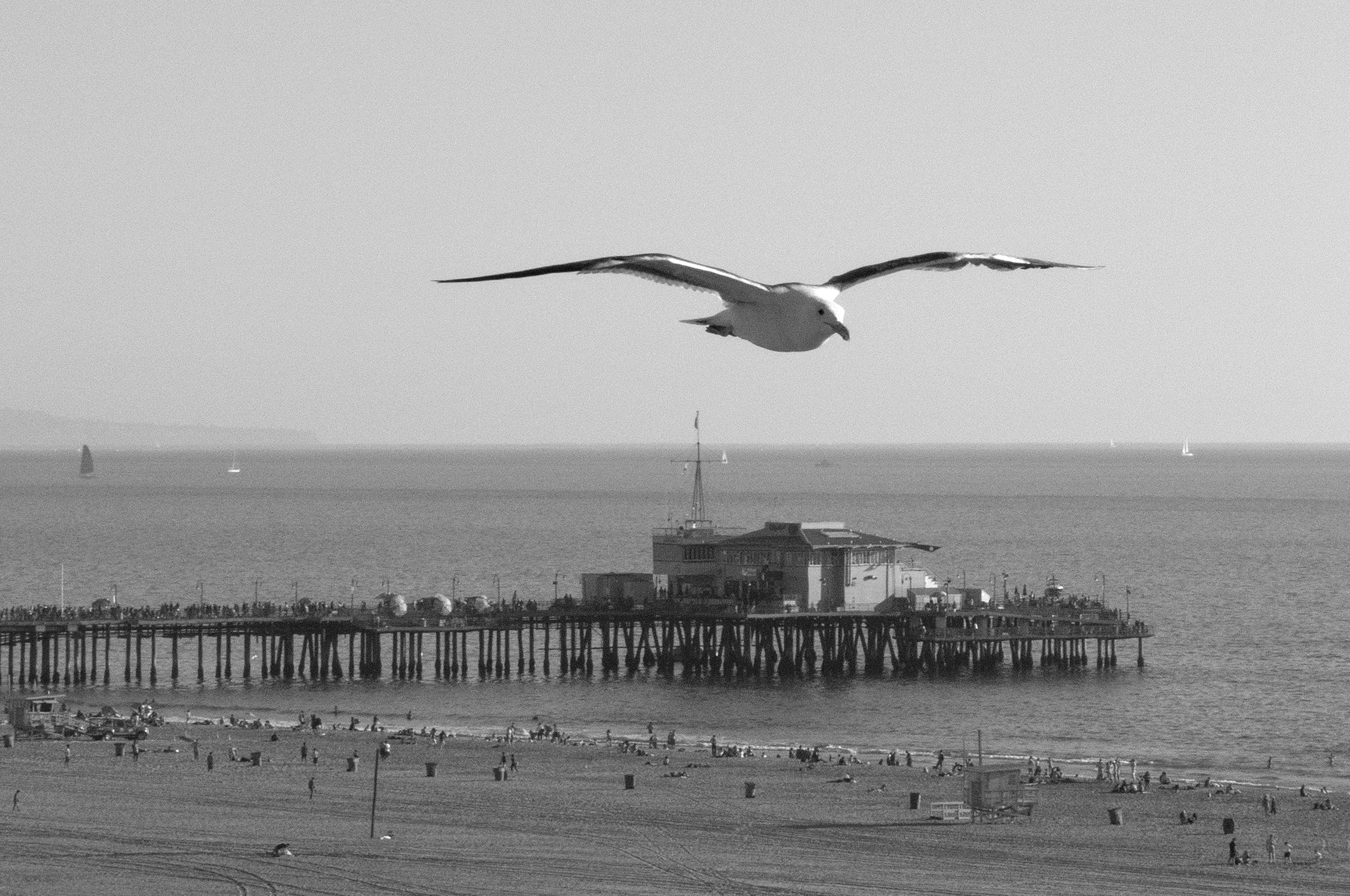 SeagullSM.jpg