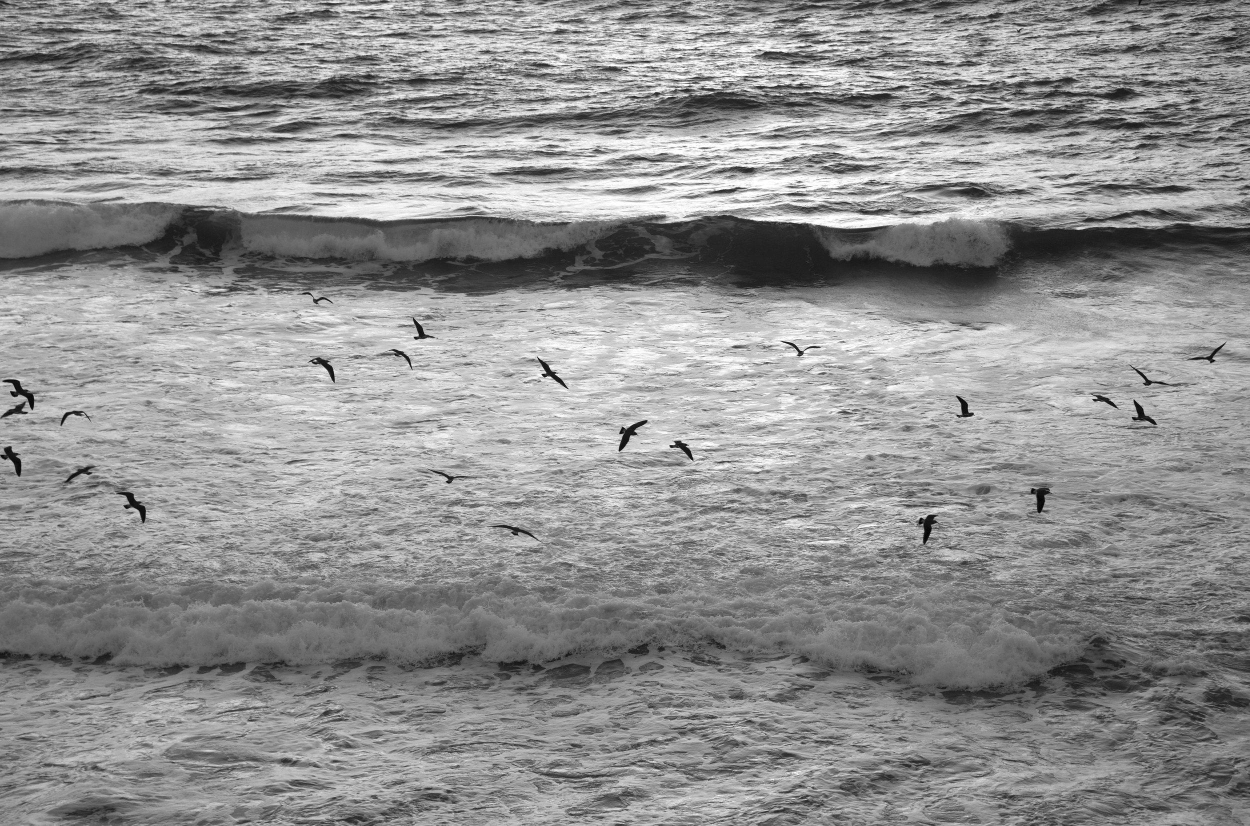 Birds Lands End SF.jpg