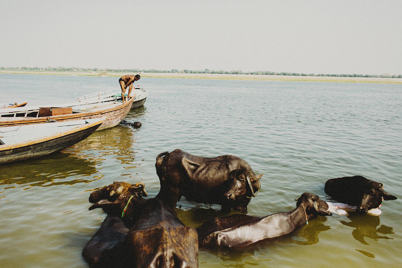 India253.jpg