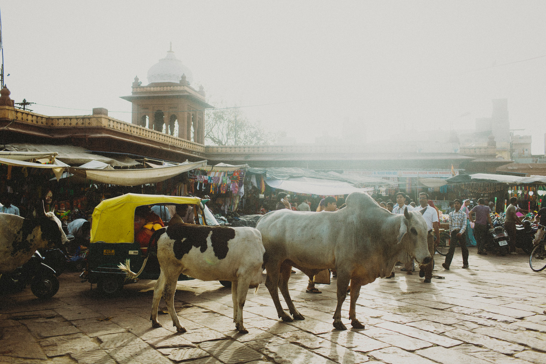 India88A.jpg