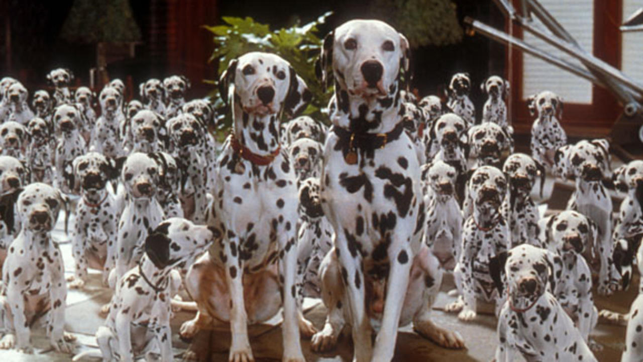 I worked as a compositor on Disney's live action remake of 101 Dalmatians. All those puppies are 3D.