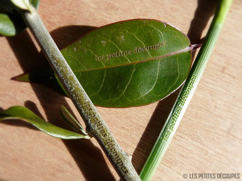gravure sur végétaux sur-mesure