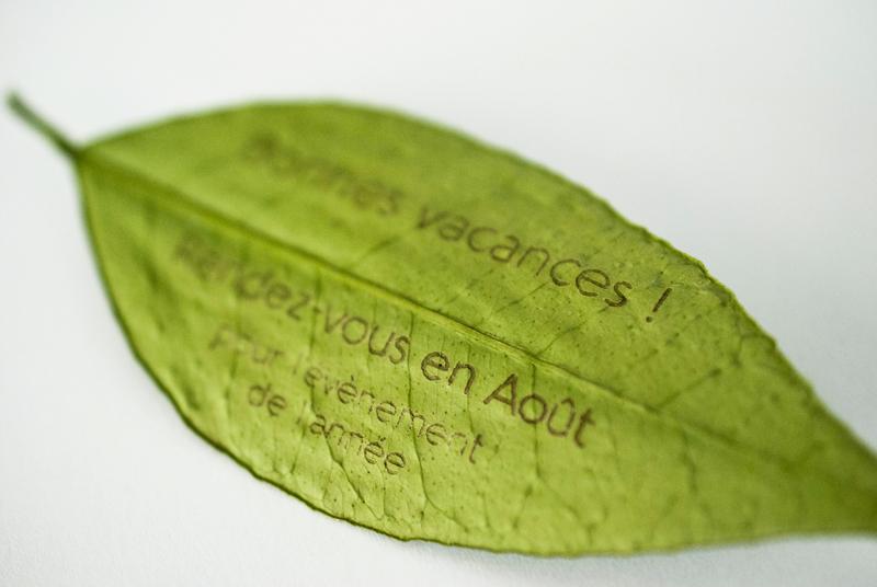 gravure originale sur végétaux