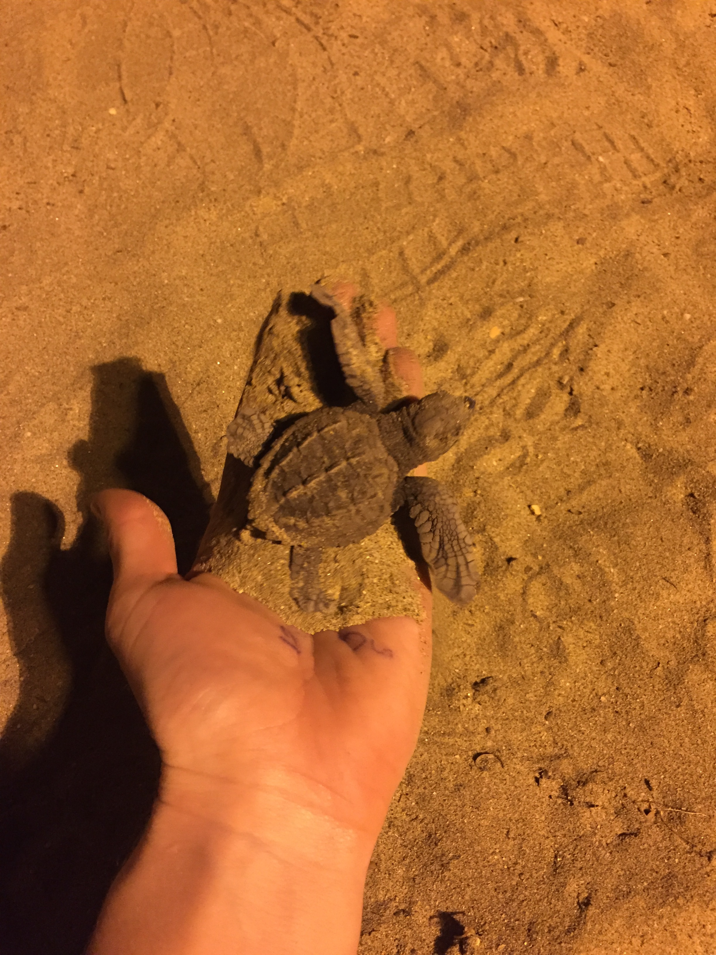 baby turtles that hatched and we took to the sea happiest life moment ever.