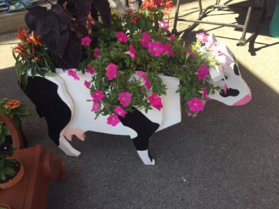 the very popular cow planters made by Steven Bullock from Main Street Woodworking