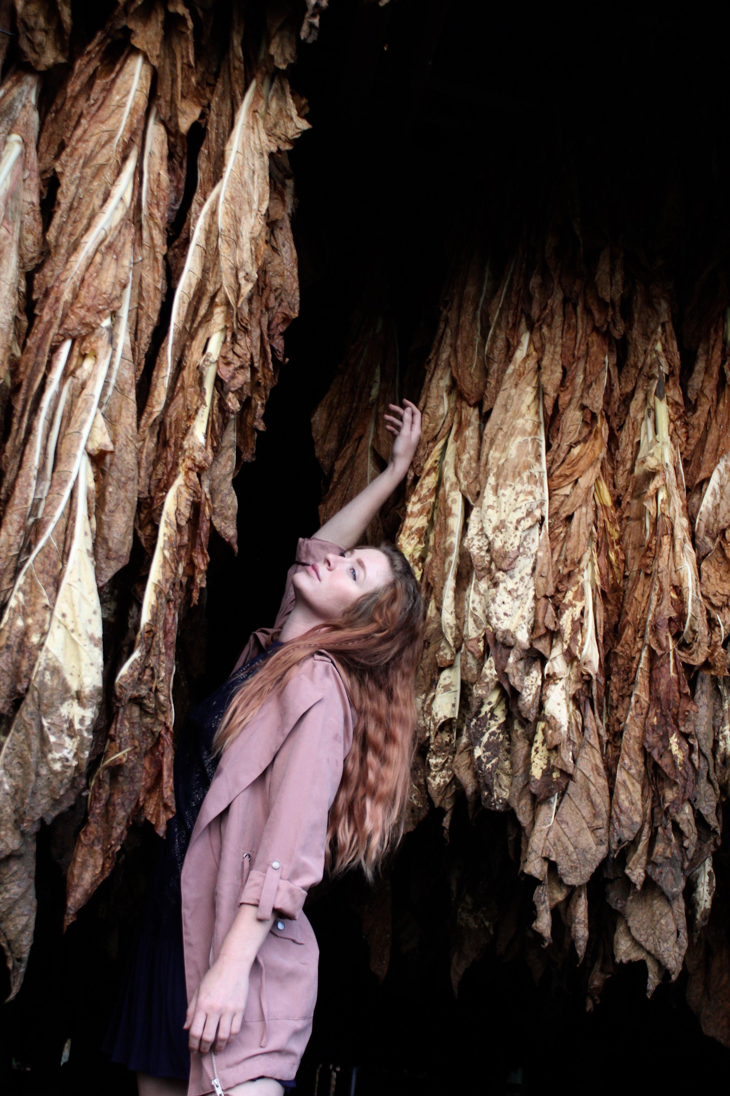 Kentucky Tabacco