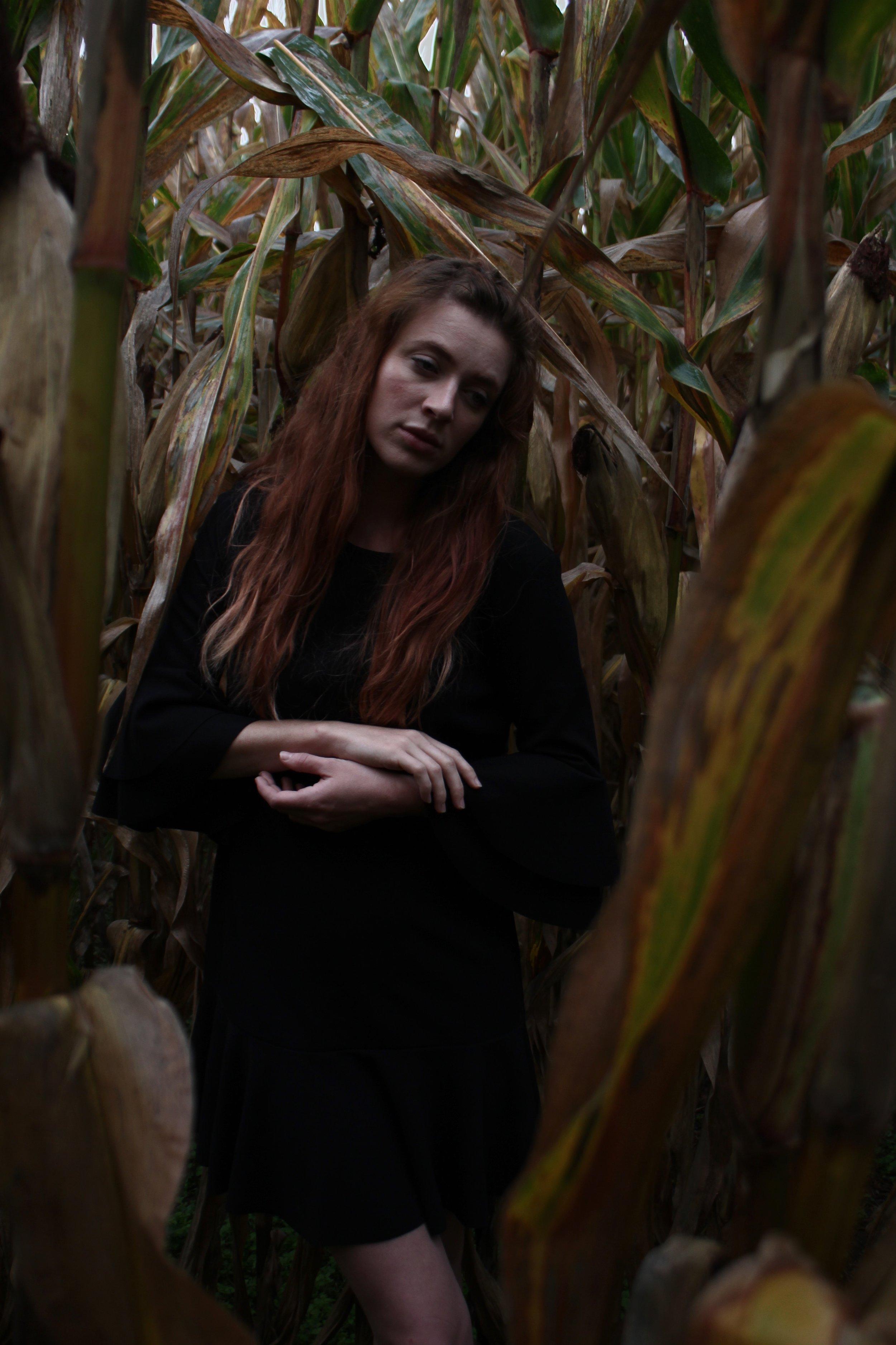 Kentucky grown corn