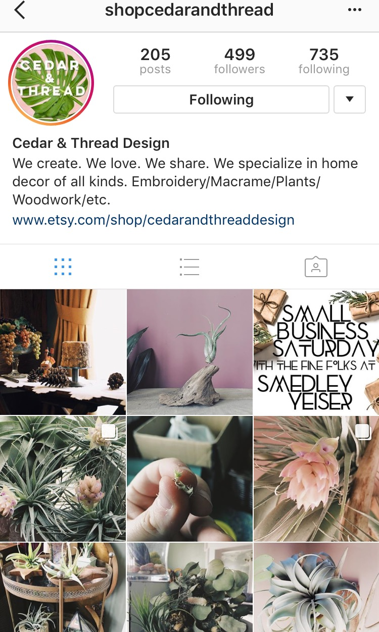 shop cedar & thread  etsy shop for awesome air plants and other home decor made right here in Kyentucky!