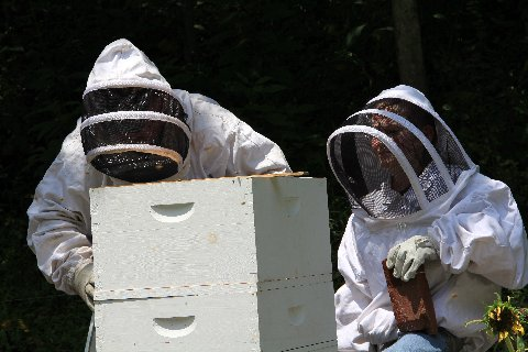inspecting the hive.JPG