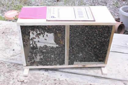 Beekeeping Resources — Marion County Beekeepers Association