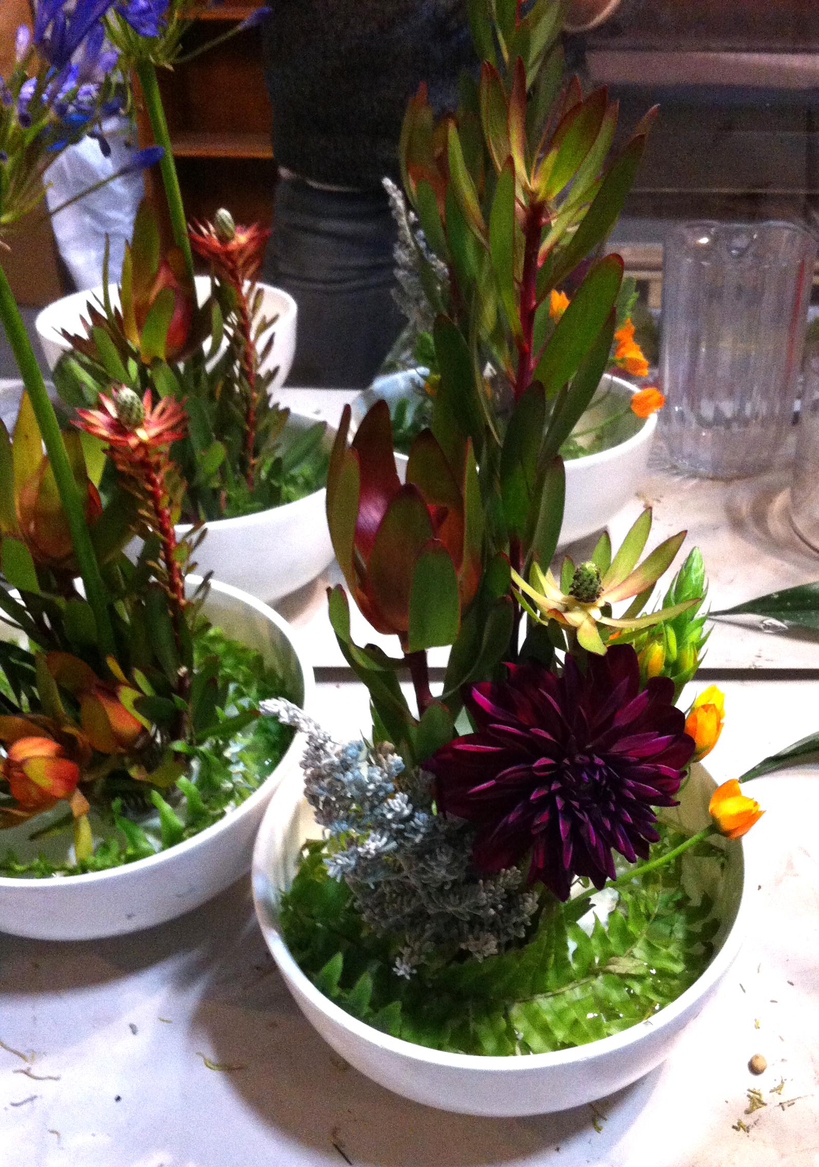 SSlunaflowers2.jpg