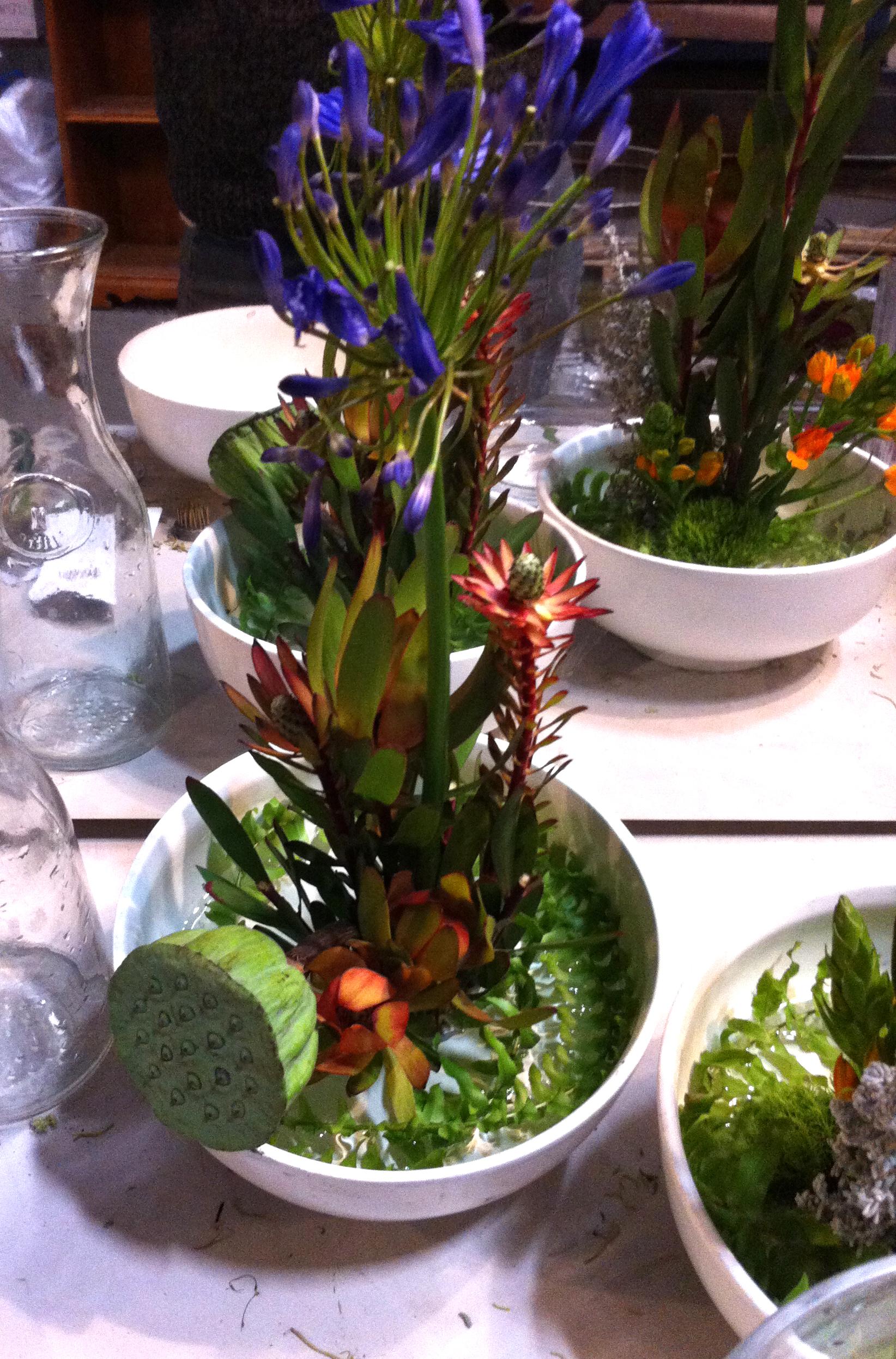 SSlunaflowers1.jpg