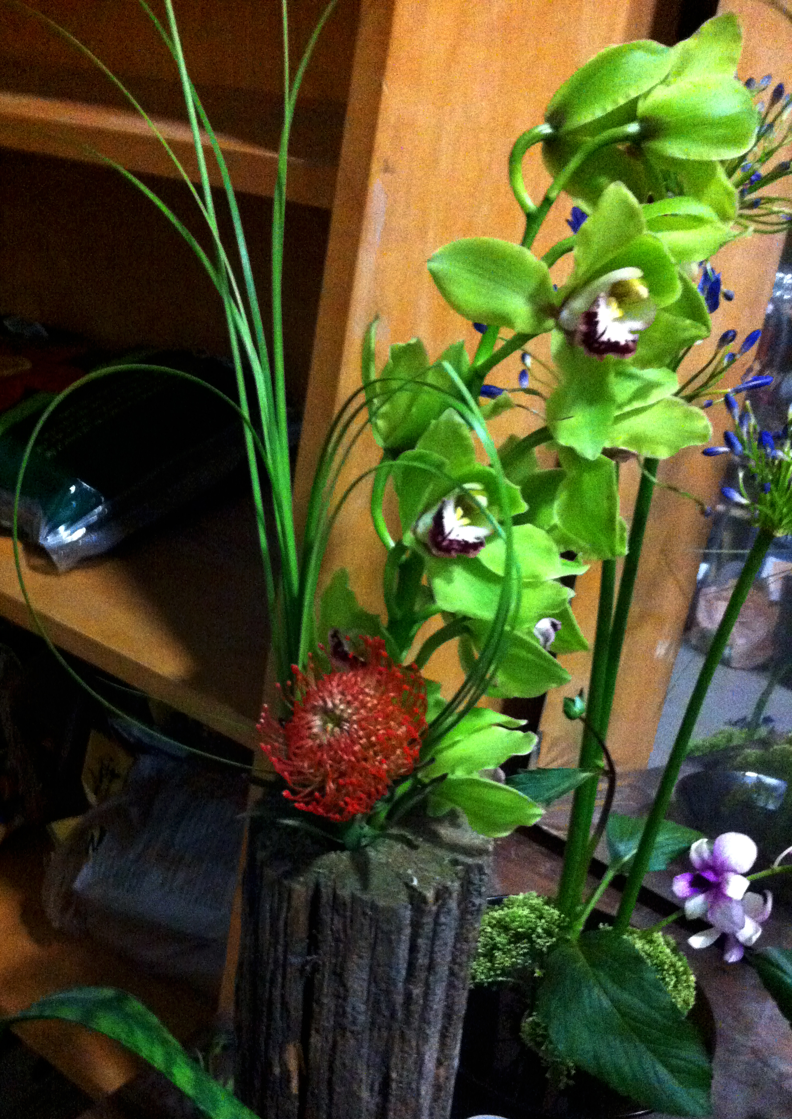 SSlunaflowers4.jpg