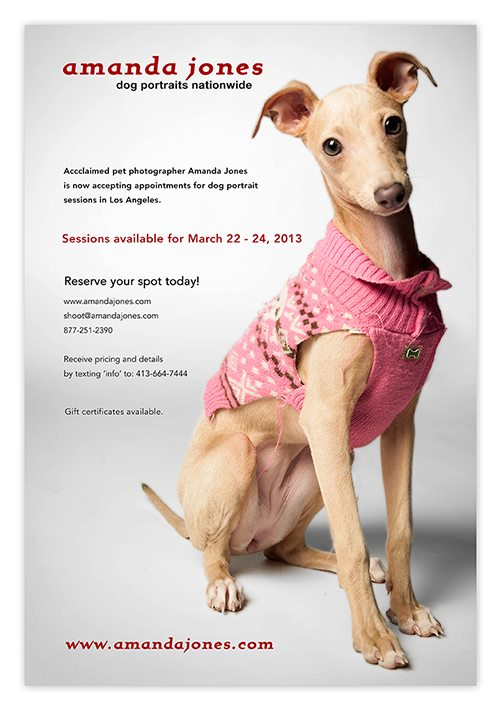 Isabella the Italian Greyhound, in her beloved ratty skull sweater, February 2013.