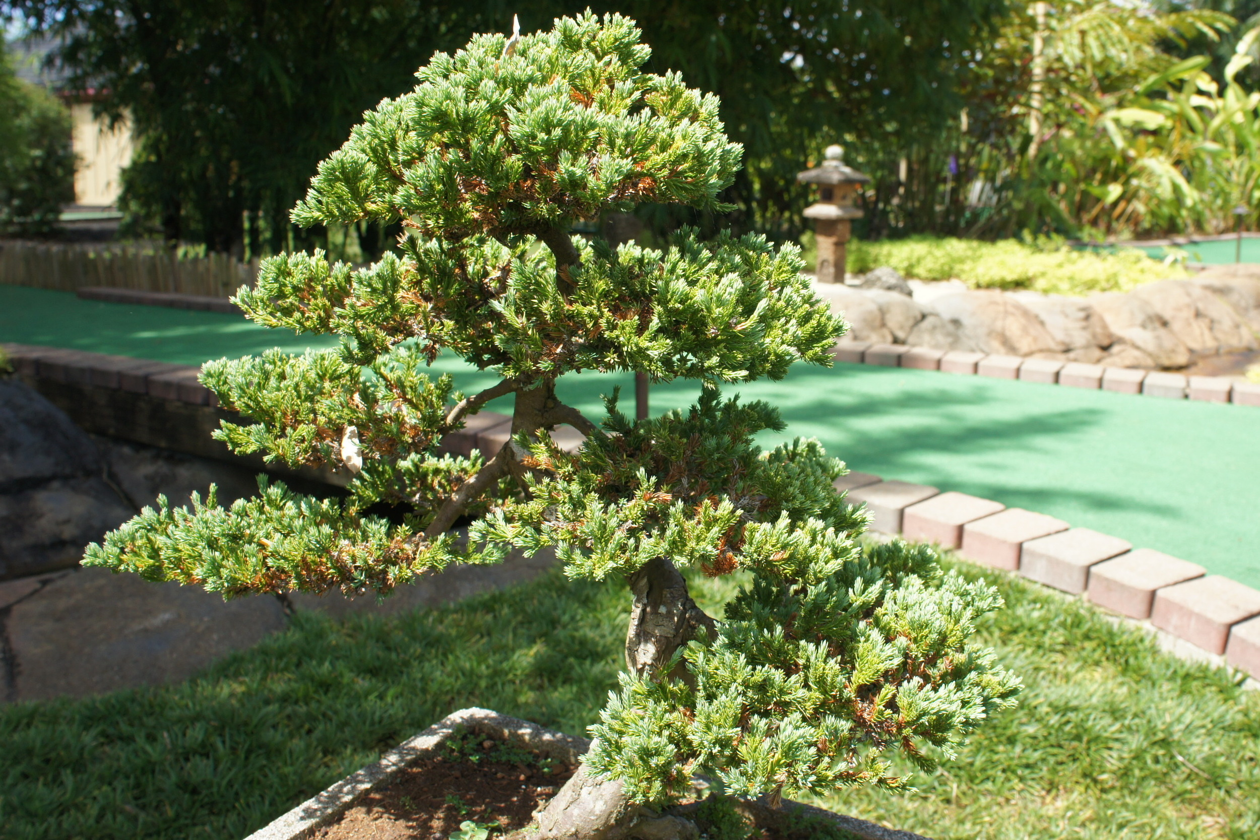 This bonsai tree has little to do with this post but I know this image is not copyrighted.