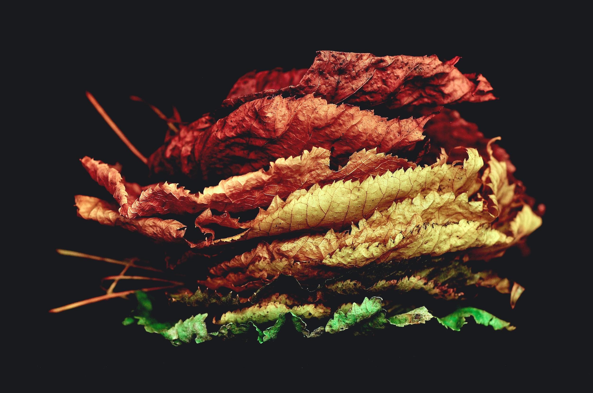 leaves changing.jpg