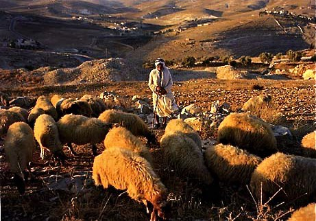 Shepherds-Field.jpg