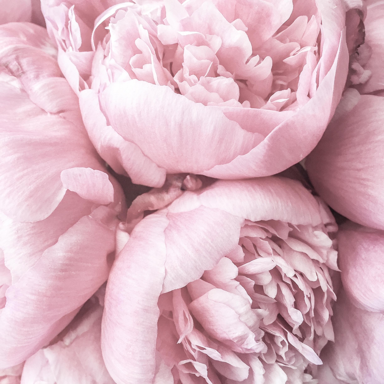 Flowers Kate Spade-1.jpg