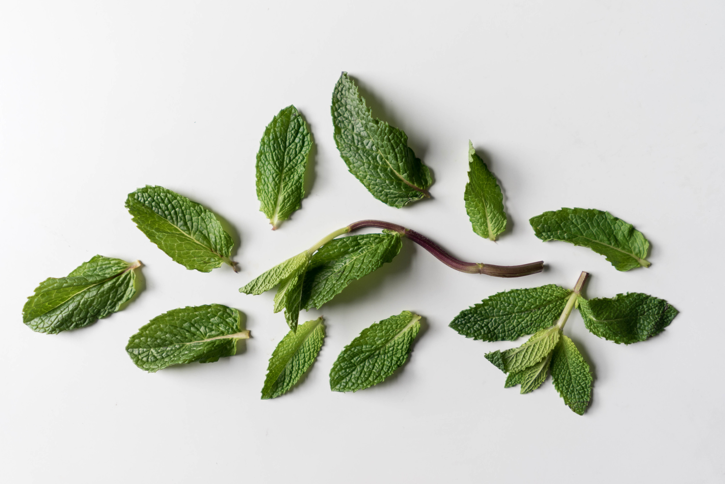 Mint Herb For Skincare