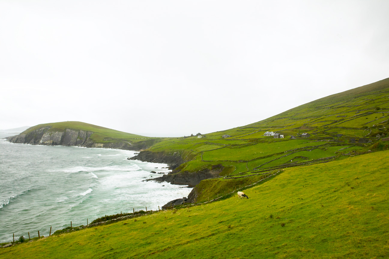 Dingle_Ireland_Coasline.jpg