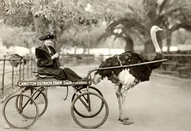 Christmas Matilda Ostrich (1201).jpg