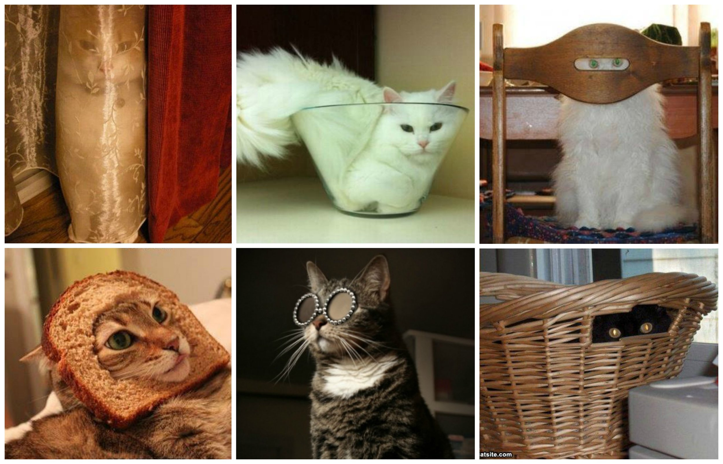 Christmas Cats Disguised Collage (1199).jpg